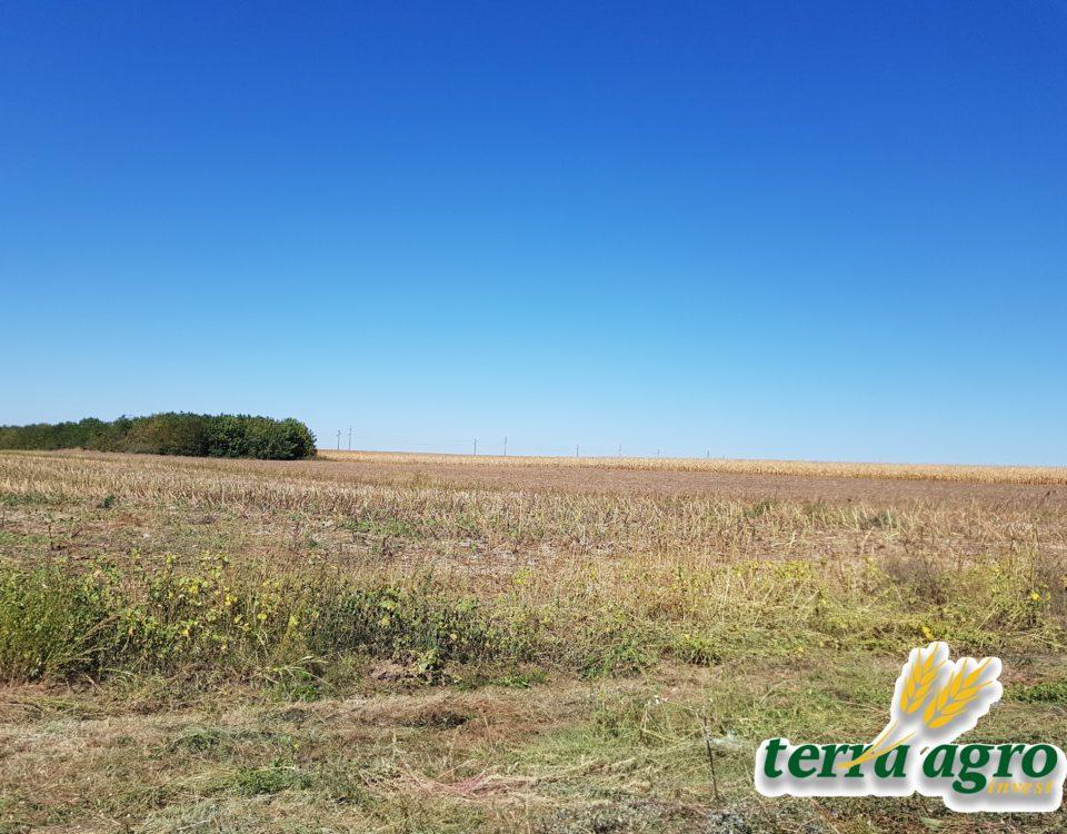 Field23